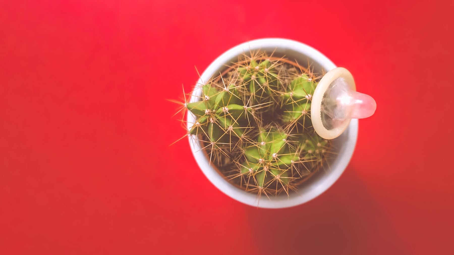 preservativo masculino apoiado em um cactus representando alergia à camisinha