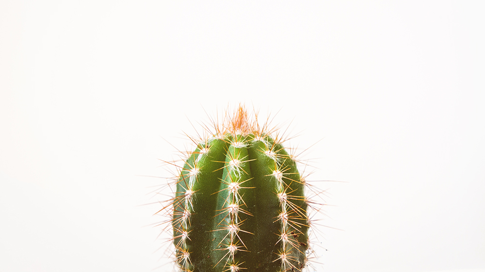 cactus representando pelos encravados na vagina