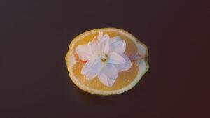 metade de uma laranja com um flor representando ph vaginal