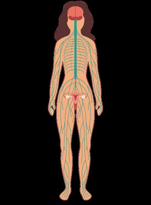ilustração corpo feminino